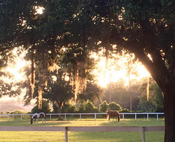 Yearlings from New York