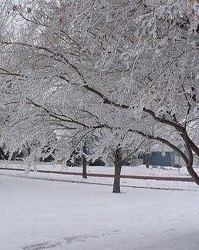 January Winter Pic.jpg