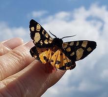 metamorphose papillon square tiny.jpg
