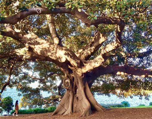 reflexologie arbre square 1275x1000 tiny