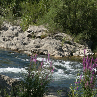 l-orb-notre-riviere-visoflora-34553.jpg