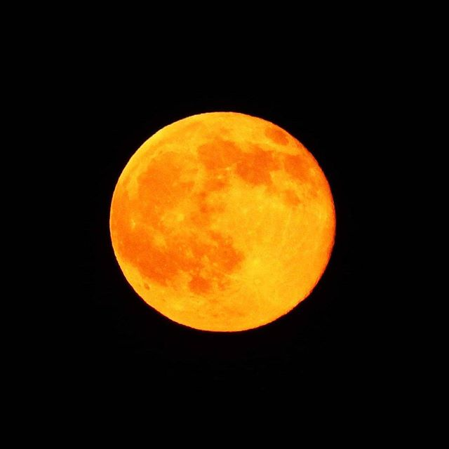 Voici, solstice strawberry moon! It looks more like an ornage, but it's still special to see a fruit