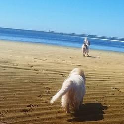 Beach pups #pbgv
