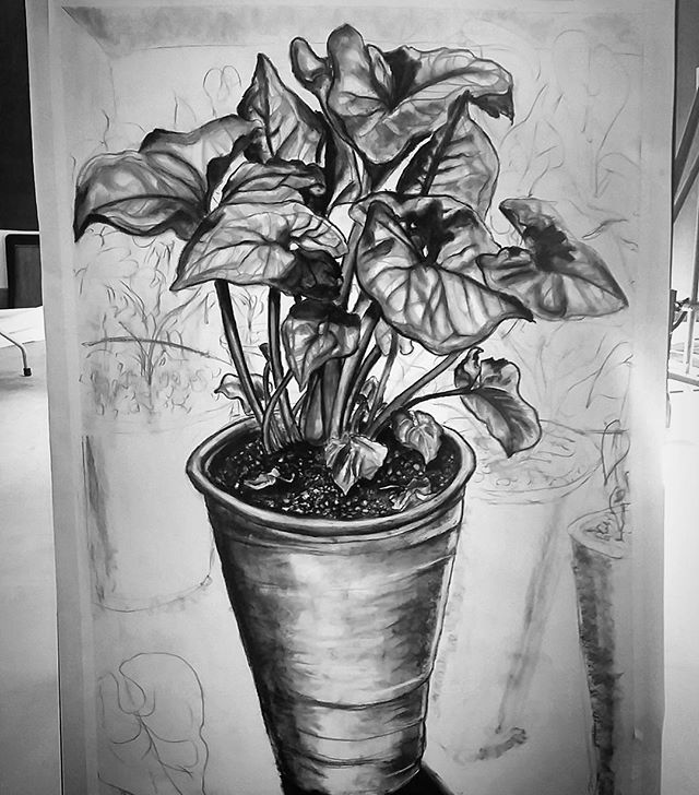 5-foot tall plant drawing