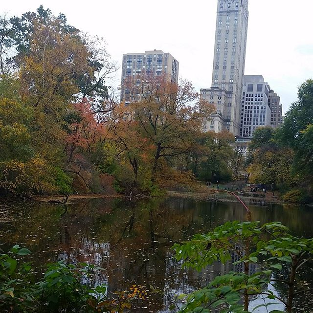 Central park! #nyc