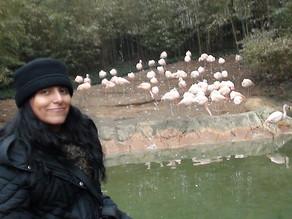 Arq. Silke Evelyn Rosas Peñarrieta, Docente, UMSS, una llamada para hábitat para nuestro flamenco