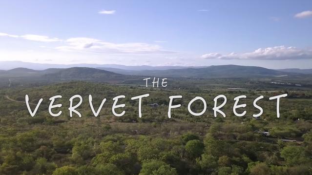 The Vervet Forest
