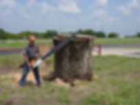 Bill Stuewe with 72 inch chainsaw sawing 65 inch  pecan