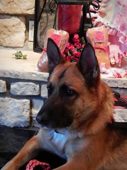 Service Dog, Heidi