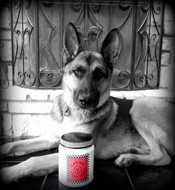 Service Dog, Carl