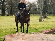 Horses for Sale Texas Diamond A Livestock