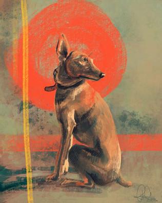 Ajax Dog