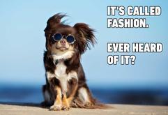 14-Hilarious-Dog-Memes.jpg