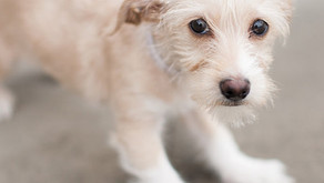 Pledge To Stop Animal Abuse