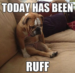 today-has-been-ruff-funny-dog-memes.jpg