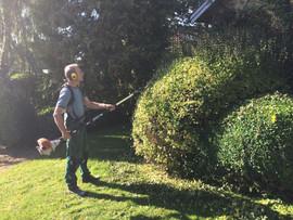 Klip af busk