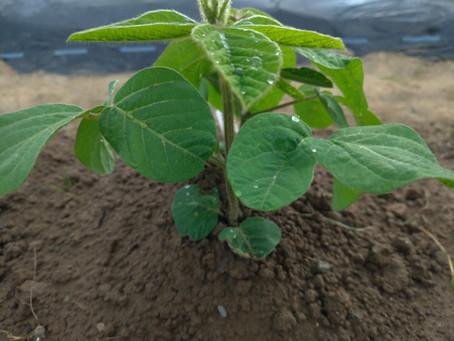 農から学ぶ!顕在意識と潜在意識!