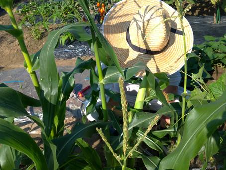 農から学ぶ!学習効果を高める7つのポイント