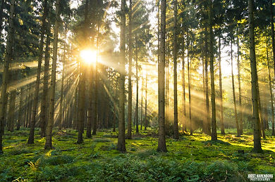 forestimage.jpg