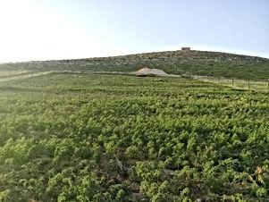 مزرعة للبيع مساحتها 4 دونم مع بئر ماء في مادبا قضاء ذيبان بسعر مناسب