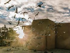 Pigeon Explosion