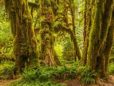 Hall of Moss