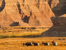 Bighorn March
