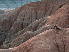 Bighorn Ridge