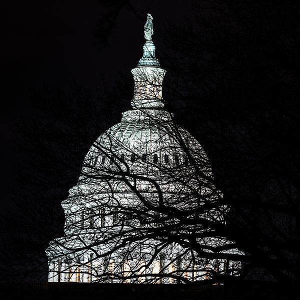 Capitol Tree 2500 sRGB.jpg