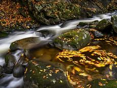 Rapids and Swirls