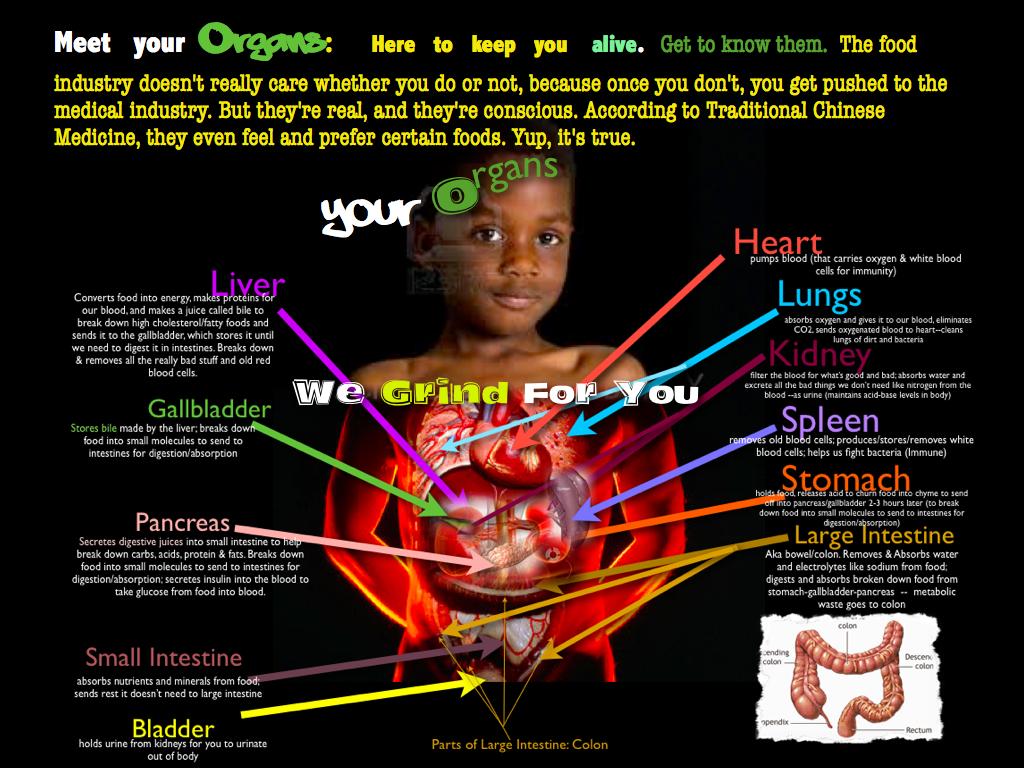 1. Meet Your Organs