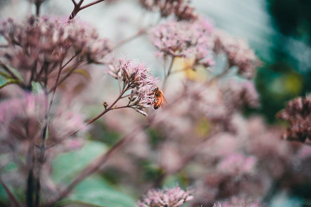 nature-close-up-of-flowers-and-wasp.jpg