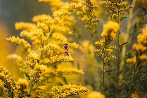 bee-on-yellow.jpg