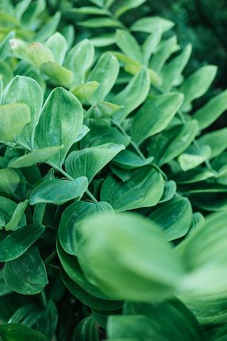 lush-green-leaves-grow-in-layers.jpg