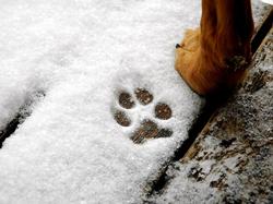 Cuidados del perro en imvierno