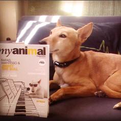 Amigos Myanimal Magazine
