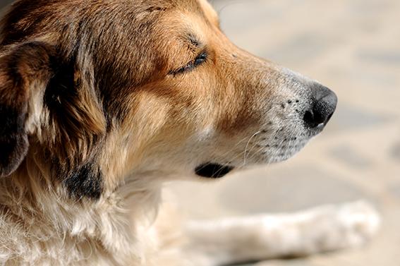El perro anciano
