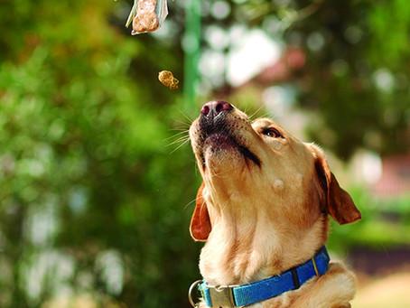 ¿Collar o arnés? Cómo pasear  a tu perro y sus consecuencias