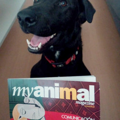 Amigos de Myanimal Magazine @whopper_thedog