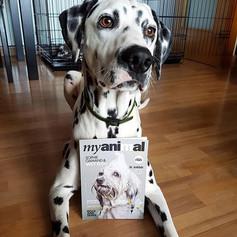 Amigos Myanimal Magazine @connor_dalmatian