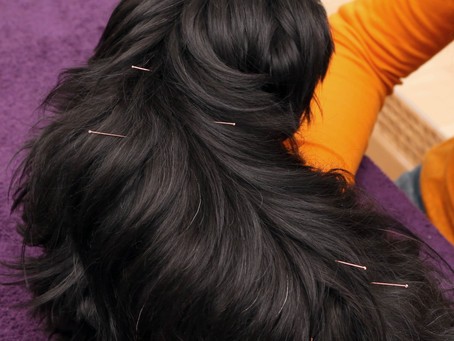 Medicina veterinaria tradicional china: Algo más que acupuntura.
