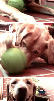 Educar a mi perro. El juego; mucho más que diversión