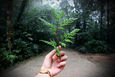 ecology-hand.jpg
