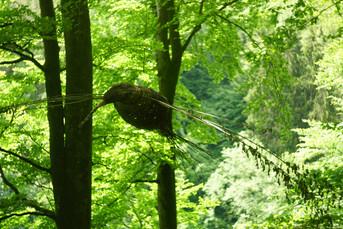 ptaki lesne 3.JPG