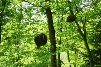 ptaki lesne 2.JPG