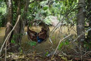 bamboo nest