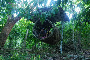 nest with a hanging roof