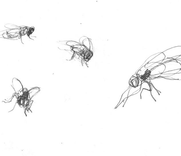 Jan Sajdak Muchy  rysunek 10 na 20 cm.jp