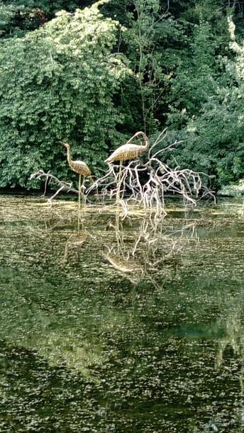 Waterbirds by the Kalendijk