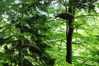ptaki lesne 1.JPG